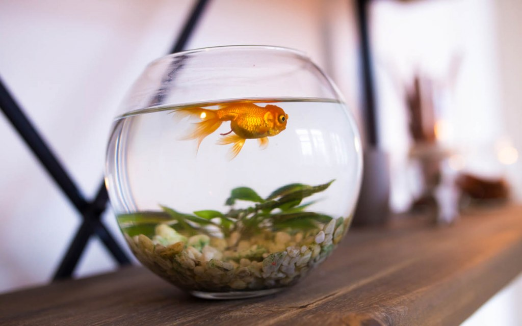 what is the best size aquarium for a beginner