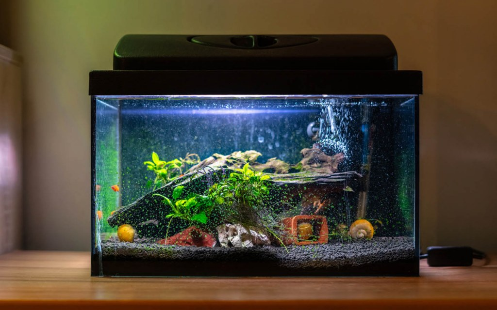 how to choose a fish tank size
