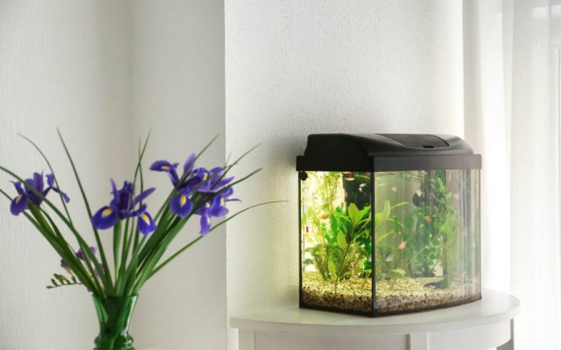 weight of home aquariums in Pakistan